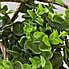 Artificial Herb Green in Cement Hanging Pot 24cm Grey