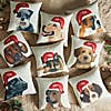 Golden Retriever Christmas Hat Cushion  Natural undefined