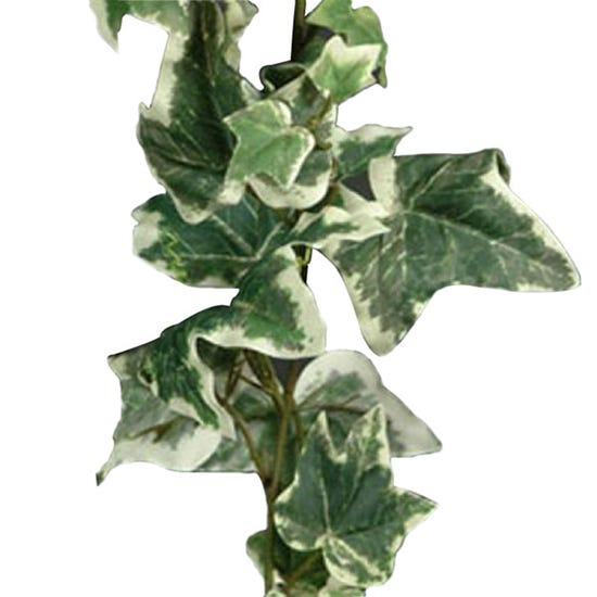 Artificial Holland Ivy Variegated Garland 182cm Green