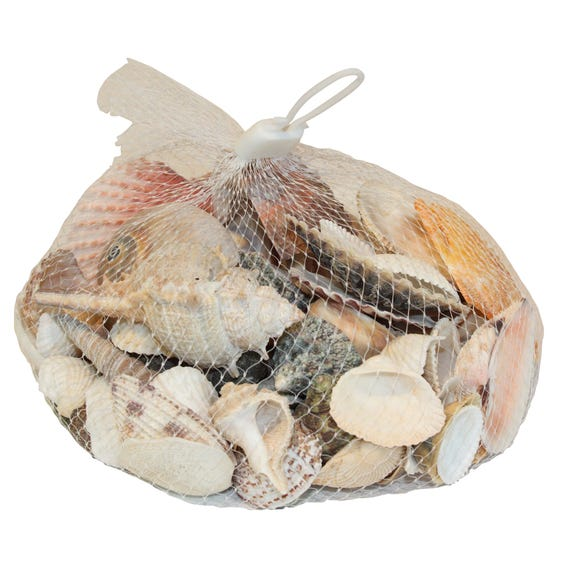 Coastal Decorative Shells Natural (Cream)