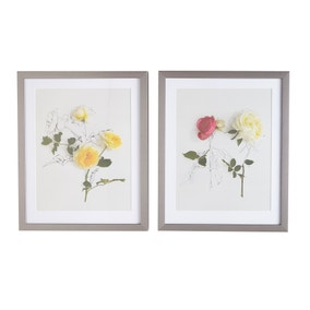Set of Two Anna Newell Roses Framed Prints