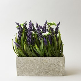 Lavender In Grey Rectangle Pot