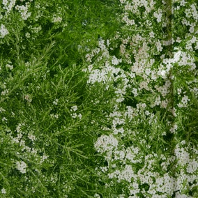 Flowers and Grass Green PVC