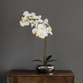 Real Touch 60cm Cream Orchid in Silver Pot