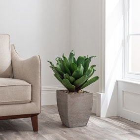 Green Succulent Plant in Wood Planter
