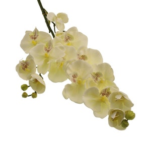 Pack of 3 Cream Real Touch 100cm Orchid Spray