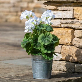Geranium Flower Pot