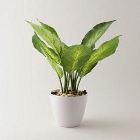 Artificial Dieffenbachia in White Pot 34cm