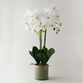 Artificial Orchid Cream in Diamond Pot 70cm
