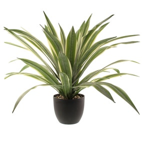 Dracaena Plant 74cm Green