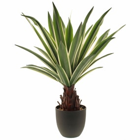 Dracaena Plant 62cm Green