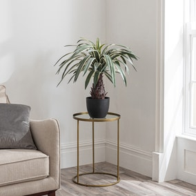 Dracaena Plant 80cm Green