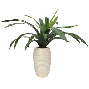 Dracaena Plant 82cm Green