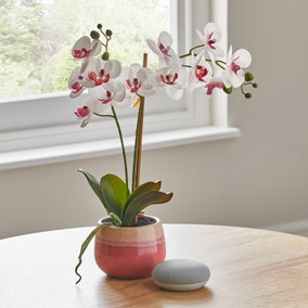 Artificial Orchid Cream in Pink Pot 48cm