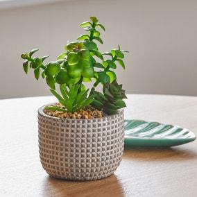 Artificial mini Succulent Garden in Cement Pot