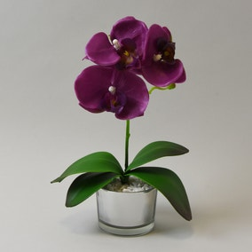 Plum Orchid in Silver Glass Pot 26cm