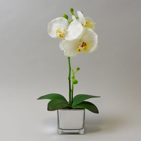 White Orchid in Silver Glass Pot 34cm White