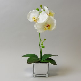 White Orchid in Silver Glass Pot 34cm