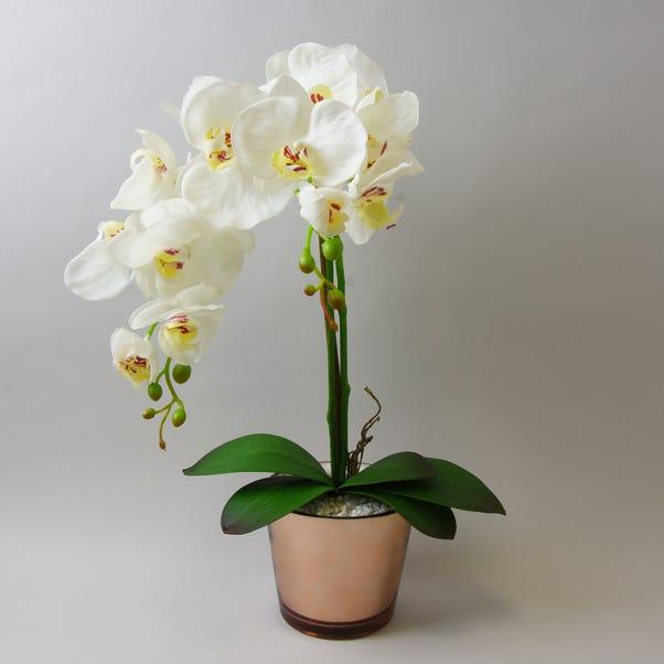 Cream Orchid in Gold Glass Pot 52cm Cream