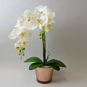 Cream Orchid in Gold Glass Pot 52cm