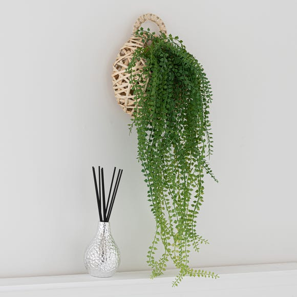 Hanging String of Pearls in Basket Green