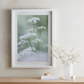 Dorma Purity Calming Cow Parsley Mounted and Box Framed Exclusive Nature Print