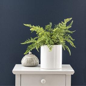 Fern in Ceramic Pot 45cm