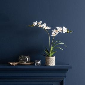 Cream Orchid in Cement Pot