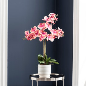 Triple Pink Orchid in Ceramic Pot