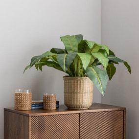 Tropical Leaf in Bamboo Basket