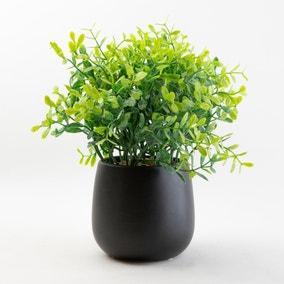Green Plant in a Black Pot