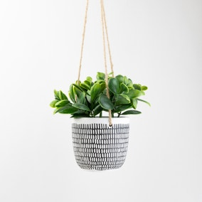 Hanging Plant in Cement Pot