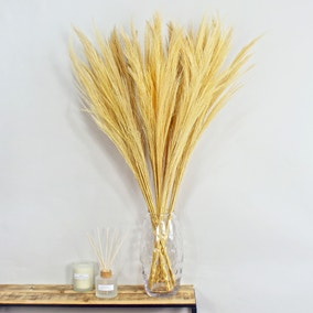 Dried Broom Grass 100cm 6 Pack Bleached