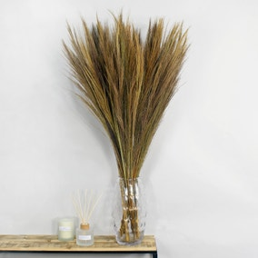 Dried Broom Grass 100cm 6 Pack Natural