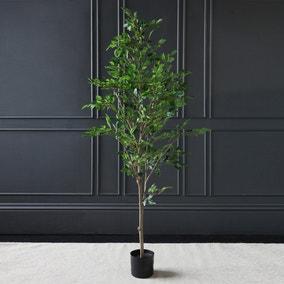 Mini Ficus Tree in Pot 155cm