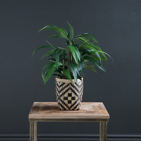 Bamboo in Woven Pot 60cm