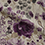 color Misty Moors Lilac Fabric Swatch