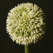Artificial Single Allium Flower Stem
