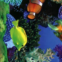 Nemo Printed PVC Fabric
