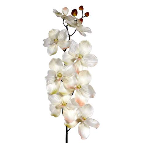 Crinkle Orchid Spray