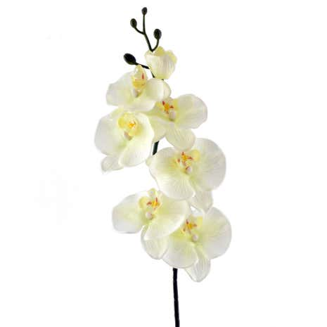 Cream Real Touch Orchid