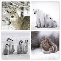 Set of 4 Photographic Animals Placemats