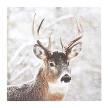 Pure & White Stag Canvas