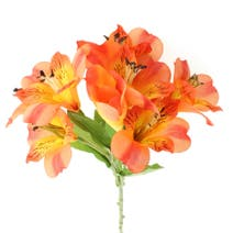 Alstromeria Spray