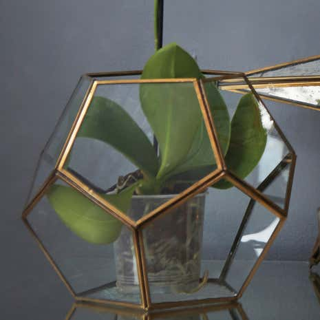 Gold Edged Glass Terrarium