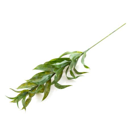Dorma Artificial Green Lily Foliage Stem