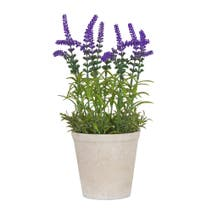 Lavender Pot Arrangement