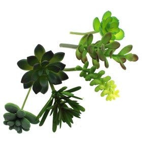 Assorted Succulent Green Stems