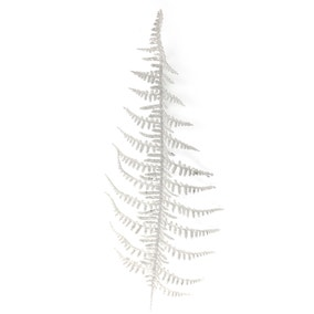 White Glitter Bracken Fern