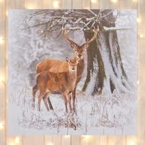 Winter Stag 40x40 Canvas